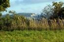 Blick durch das Gras auf den Bodden