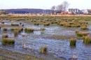 Moorlandschaft am Segelhafen