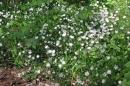 27-waldblumen