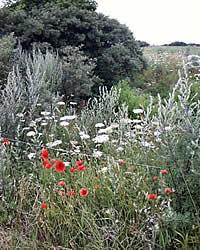 Gräser im Nationalpark