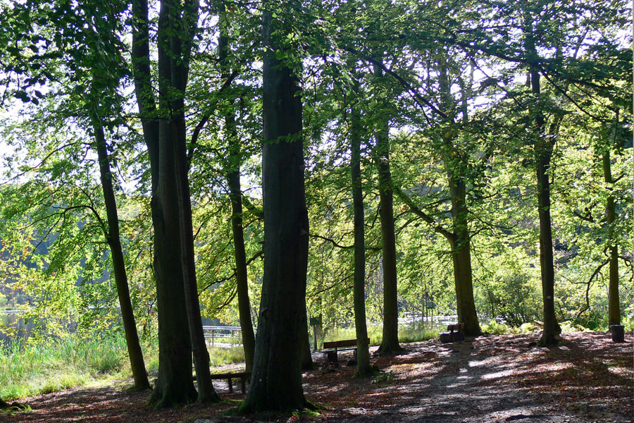 Der Wald in der Granitz