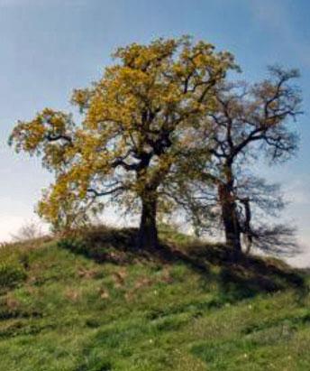 Der Himmel - Hügelgrab bei Silmenitz