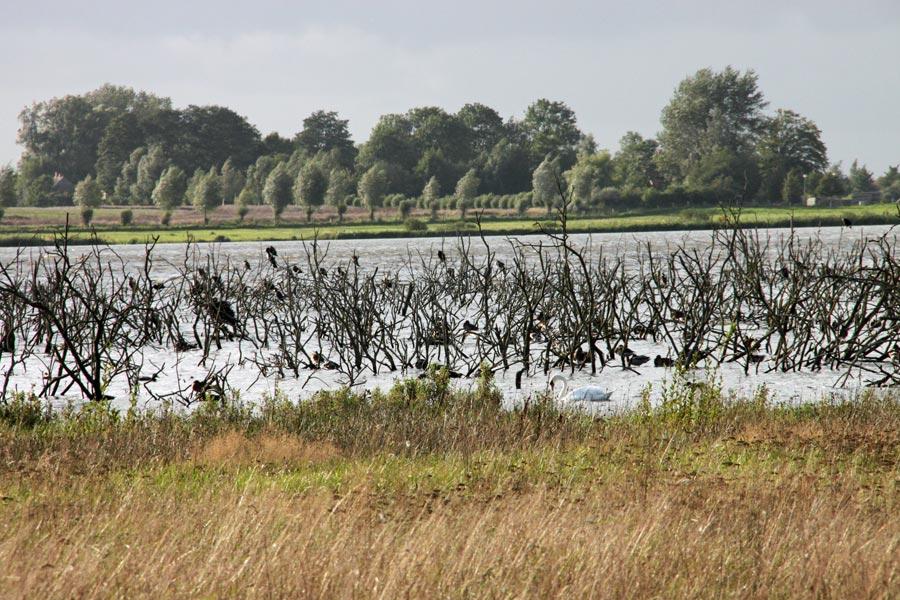 Vögel auf dem Nonnensee auf Rügen
