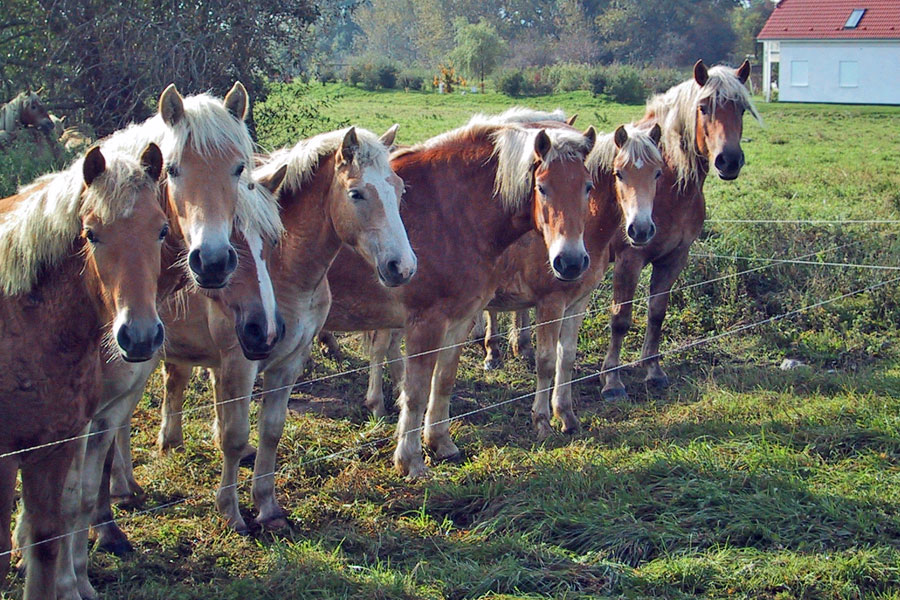 Pferde auf Ummanz
