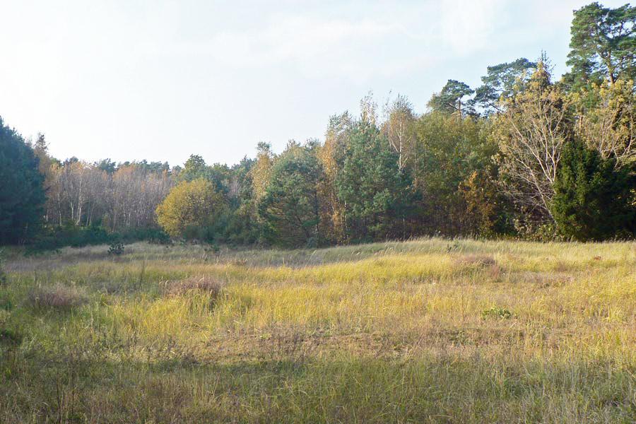 Heide, Birken und Kiefern wachsen im Gebiet der Schmalen Heide