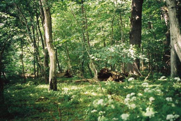 Insel Vilm Wald