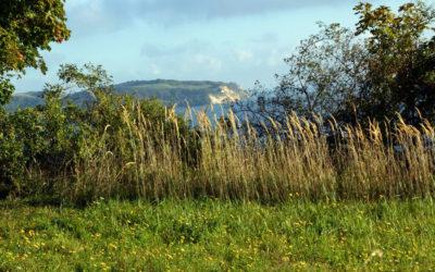 Blick vom Reddevitzer Höft auf die Bucht Alt Reddevitz